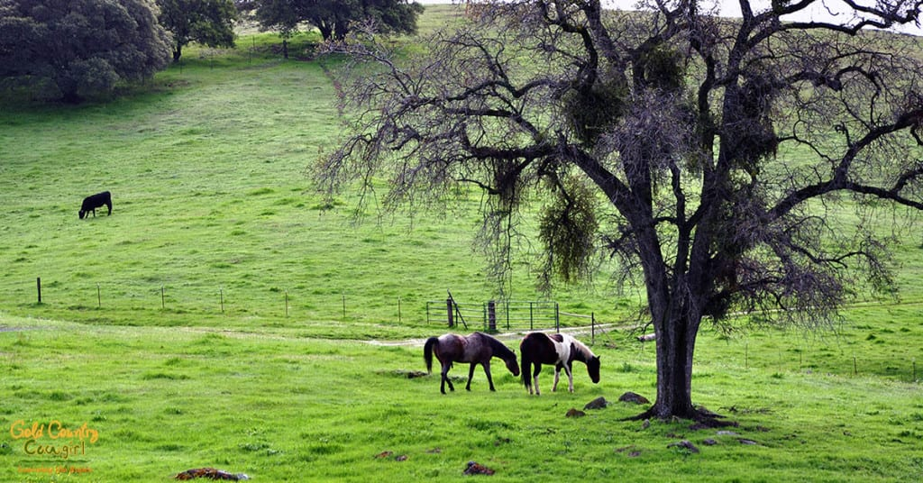 Horses and cows dot the landscape in gold country