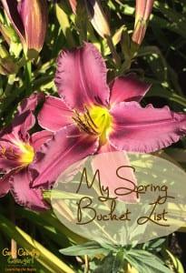 My Spring Bucket List - photo of daylily