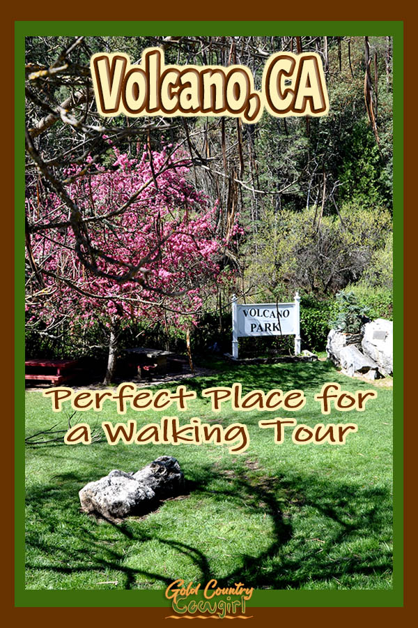 tree with pink blossoms in Volcano Park with text overlay: Volcano, CA Perfect Place for a Walking Tour