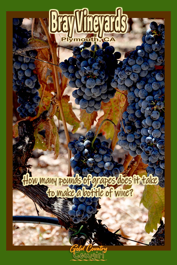 Purple grapes with text overlay: Bray Vineyards Plymouth, CA How many pounds of grapes does it take to make a bottle of wine?