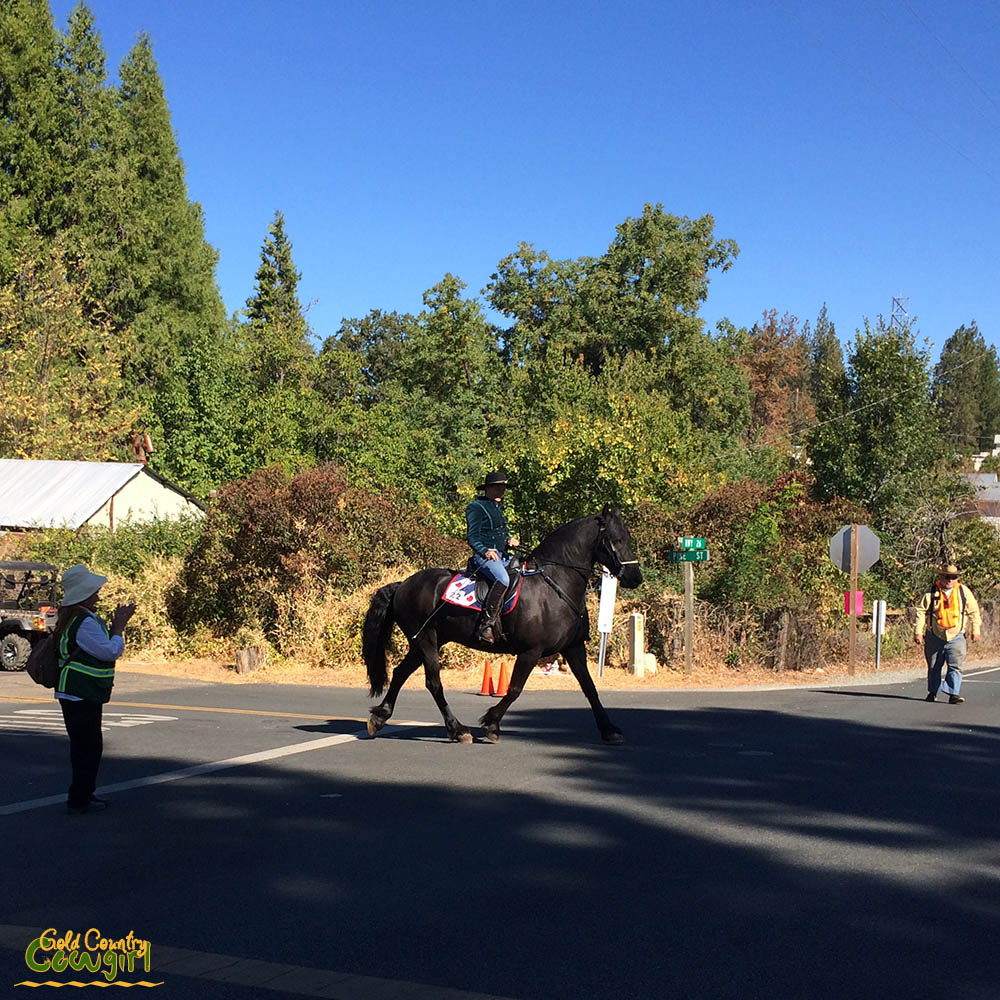 Horse and rider heading to parade route