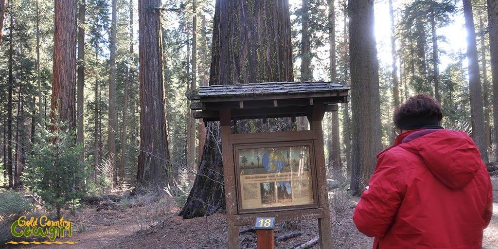 interpretive kiosk at Calaveras Big Trees State Park