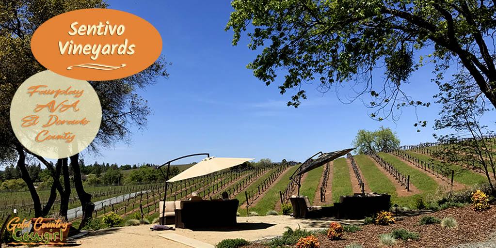 Join the Family at Sentivo Vineyards