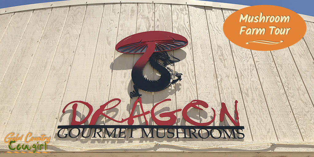 Mushroom Farm Tour -- Dragon Gourmet Mushrooms