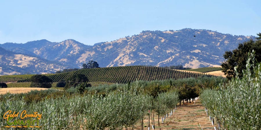 It was a beautiful day for an excursion to Longview Farm in Winters, CA