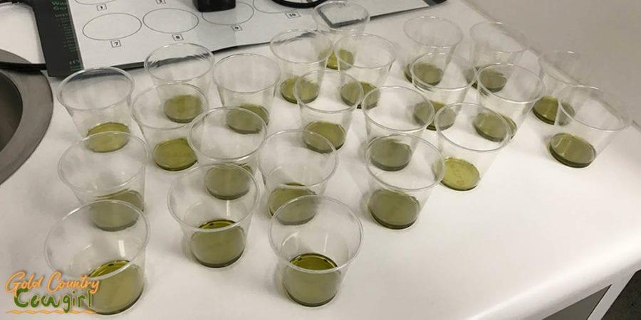 Olive oil samples