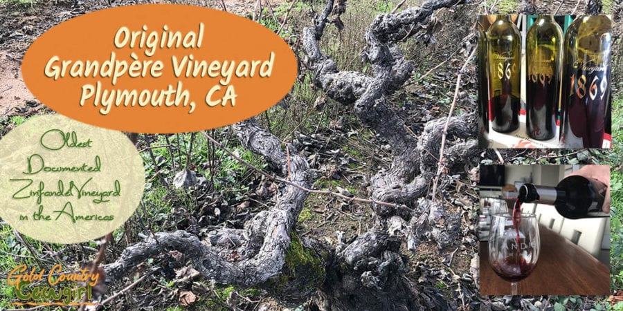 I've been researching Zinfandel for some time now, learning what is so special about old vine Zinfandel. When I saw an opportunity to visit the oldest documented Zinfandel vineyard in the Americas, planted in the 1860s, I knew I had to go.