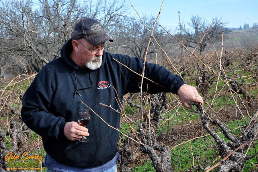 Old vine Zinfandel pruning demonstration with Rusty Folena of Vino Noceto