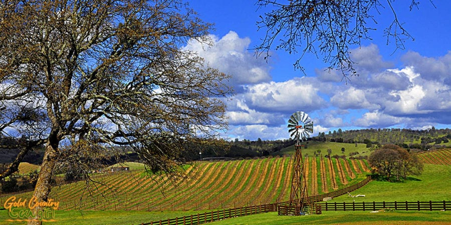 An amazing day and view at Rancho Victoria Vineyard