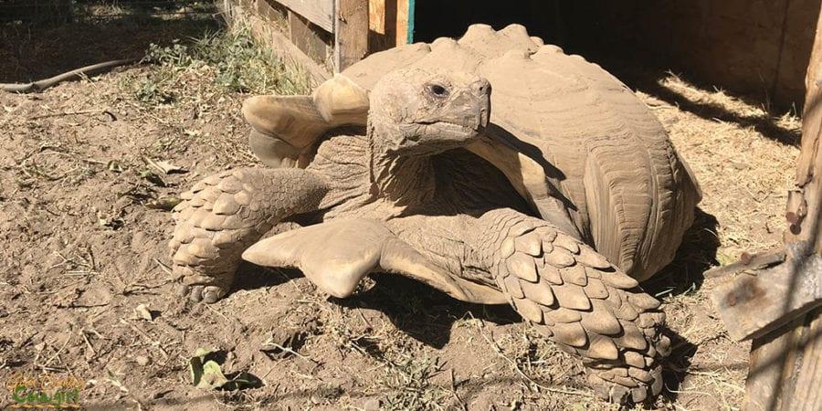 JGW tortoise