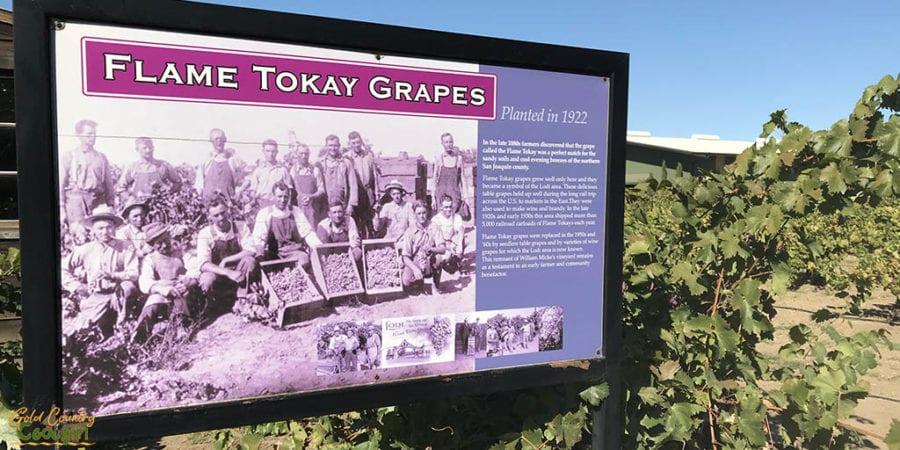 SJC Museum Tokay grapes poster