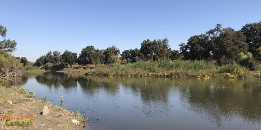The San Joaquin River, just steps from my site at Fisherman's Bend