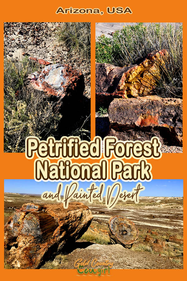 Three photos of petrified wood with text overlay: Arizona, USA Petrified Forest National Park and Painted Desert
