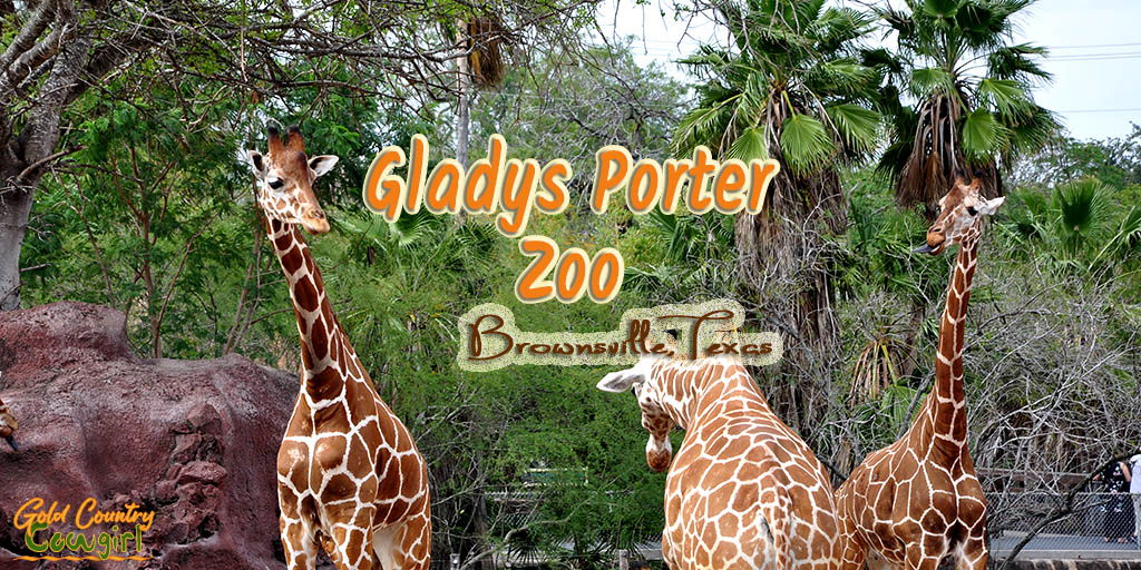 Gladys Porter Zoo in Brownsville, Texas, has more than 1500 animals, representing nearly 400 species, and is known for its success in breeding endangered wildlife.