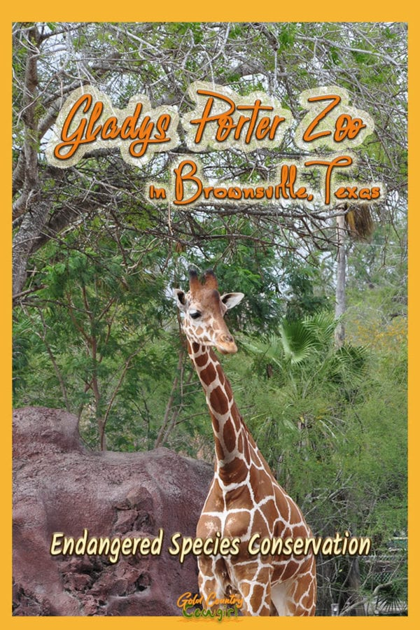 Gladys Porter Zoo in Brownsville, Texas, has more than 1500 animals, representing nearly 400 species, and is known for its success in breeding endangered wildlife. #travel #usa #texas #zoo #conservation #wildlife
