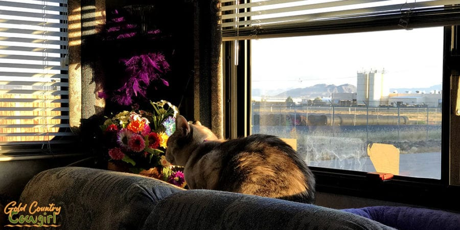 Sun shinging through window on cat at D3