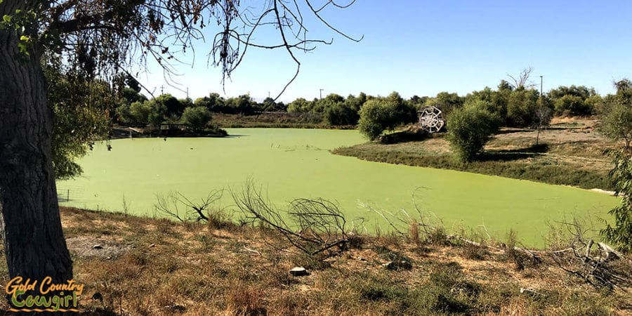 Fishermen's Bend pond