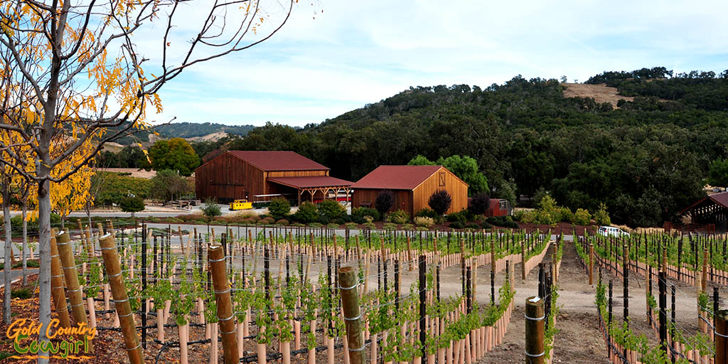 Halter Ranch vineyards