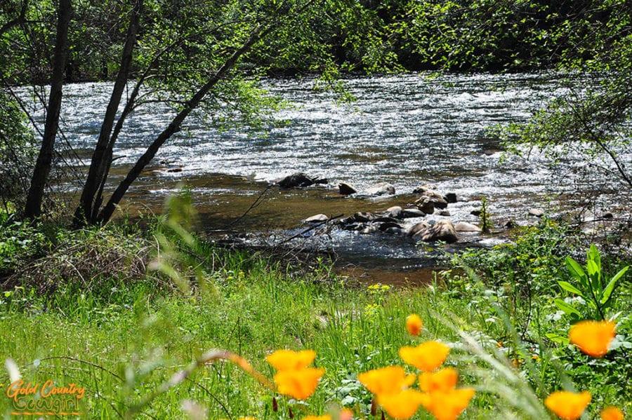 Poppies along Mokelumne River on Electra Rd