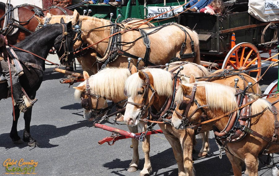 team of three horses