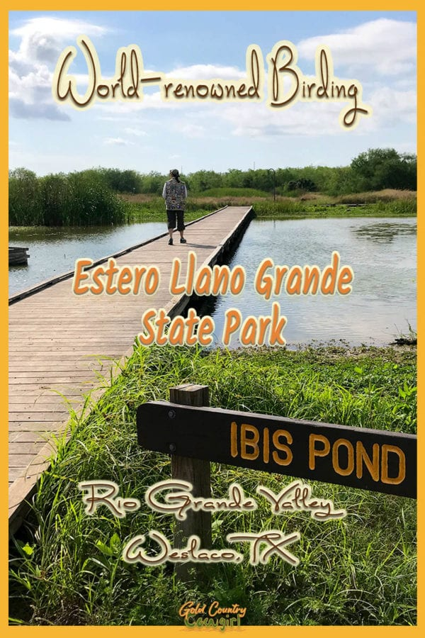walkway over Ibis Pond with text overlay: world-renowned birding Estero Llano Grande State Park