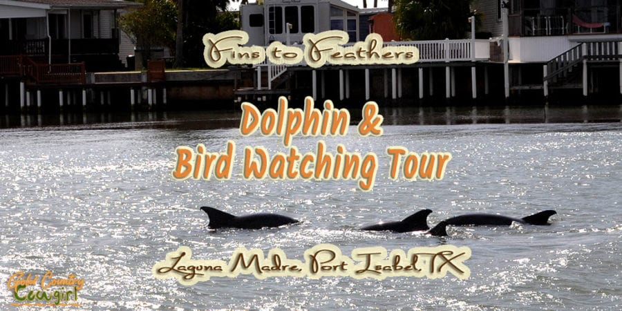 photo of dolphins with text overlay: Fins to Feathers Dolphin and Bird Watching Tour Laguna Madre, Port Isabel, TX
