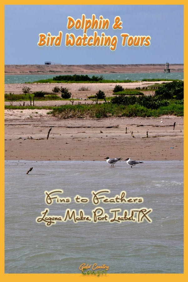 birds near the beach with overlay text: Dolphin & Bird Watching Tours Fins to Feathers Laguna Madre, Port Isabel, TX
