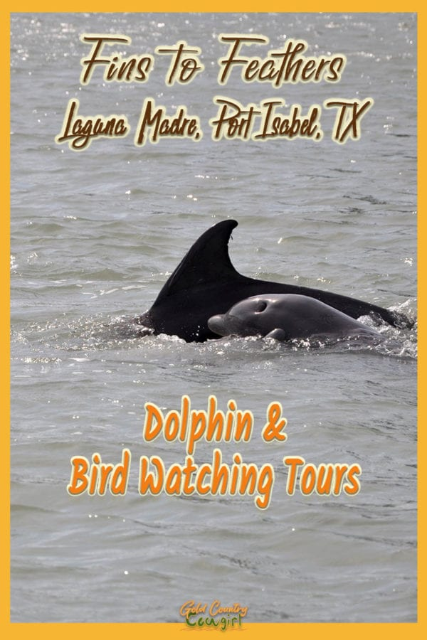 dolphins swimming with overlay text: Fins to Feathers Laguna Madre, Port Isabel, TX Dolphin and Bird Watching Tours