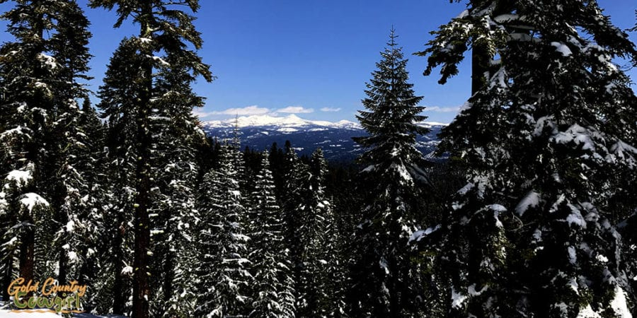 view through the trees of far off snow capped mountains