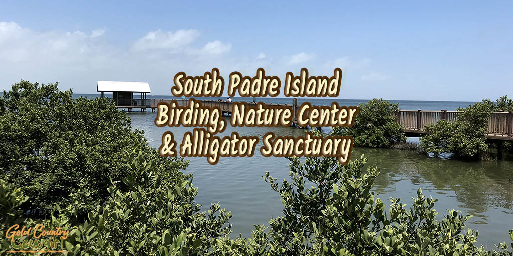 Alligators Find a New Home at South Padre Island Birding and Nature Center