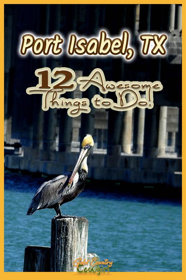 pelican on a pilon with text overlay: Port Isabel, TX 12 Awesome things to do!