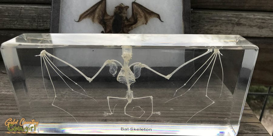 Bat skeleton display