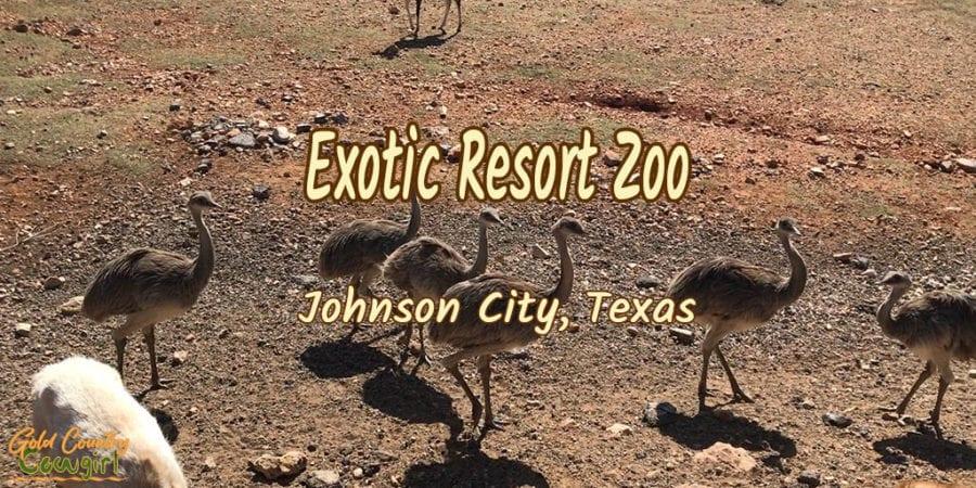 Flock of rheas with text overlay: Exotic Resort Zoo Johnson City, Texas