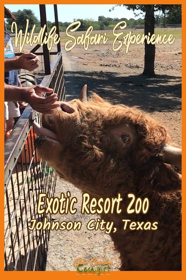Hands feeding a cow with text overlay: Wildlife Safari Experience Exotic Resort Zoo Johnson City, Texas