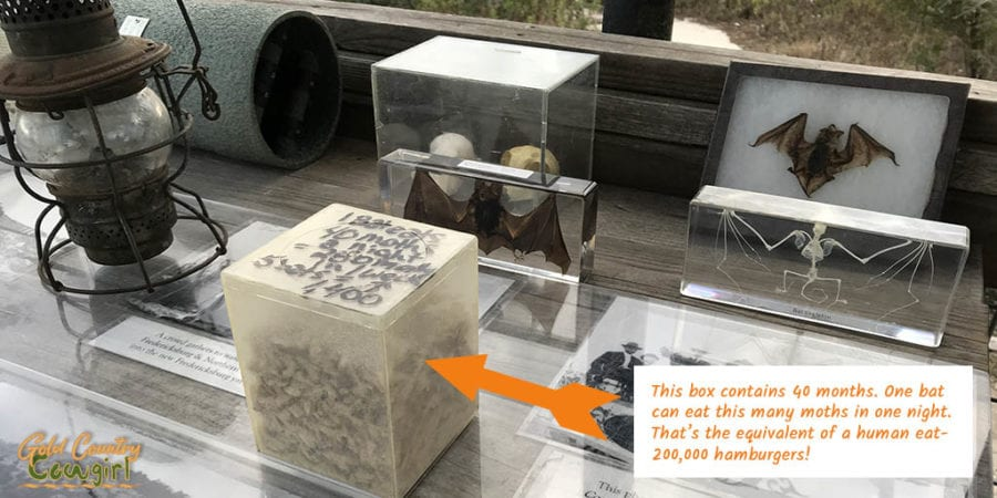 Display of box with average number of moths eaten in a night by a bat