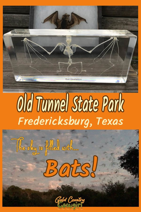 Bat photos with text overlay: Old Tunnel State Park Fredericksburg, Texas The sky is filled with bats!