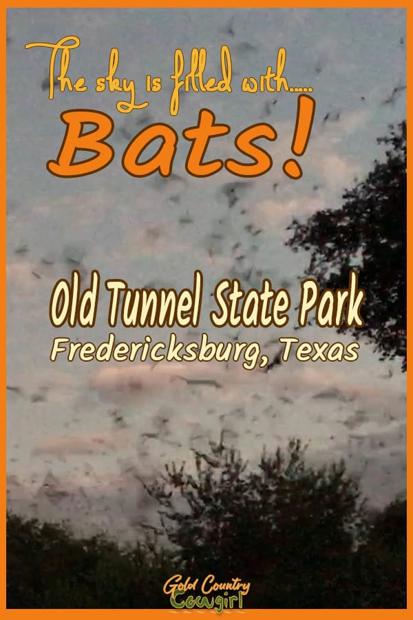 Photo of sky with text overlay: The sky is filled with Bats! Old Tunnel State Park Fredericksburg, Texas