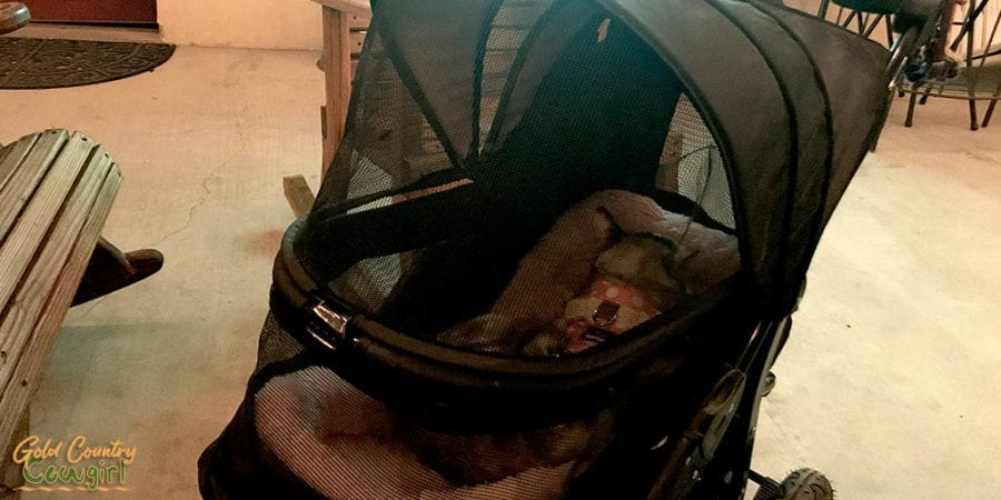 Christy in stroller at Texas Legato Winery