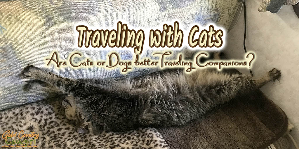 Traveling with Cats -- Are cats better traveling companions than dogs?