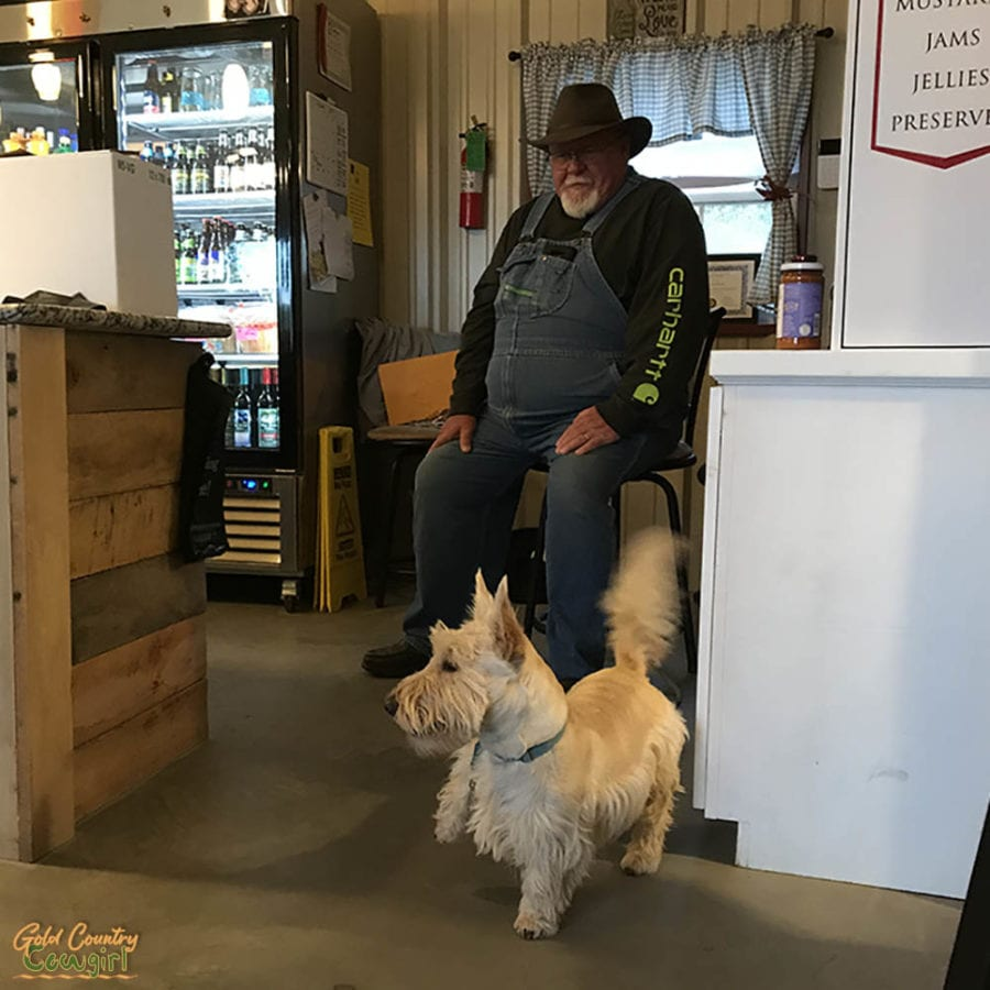 wine dog at Blue River Valley Winery wheaten Scottish terrier