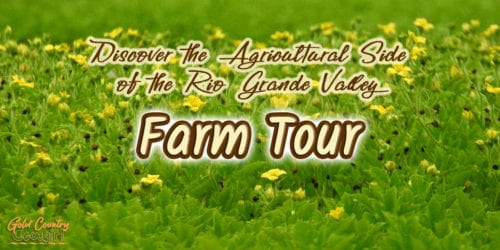 green foliage with yellow flowers and text overlay: Discover the agricultural side of the Rio Grande Valley Farm Tour