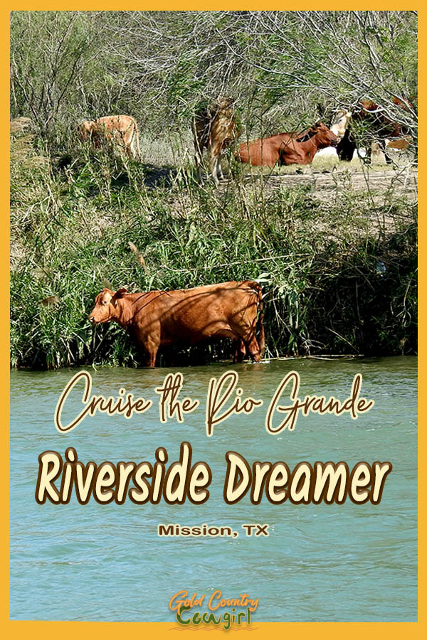 Cows on the river bank with text overlay: Cruise the Rio Grande Riverside Dreamer Mission, TX