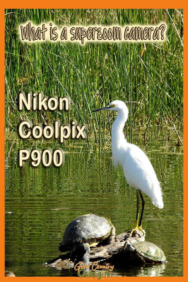 snowy egret and turtles with text overlay: What is a superzoom camera? Nikon Coolpix P900