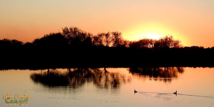sunset at La Feria Nature Center