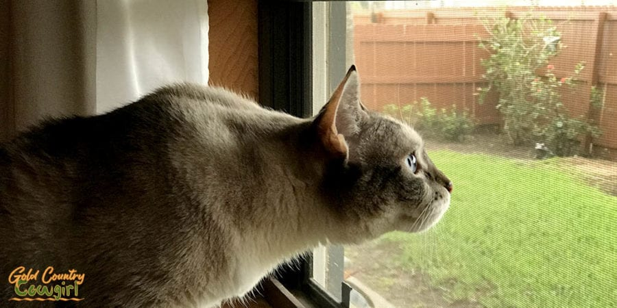 excited cat looking out window
